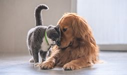 Friendly cat and dog.